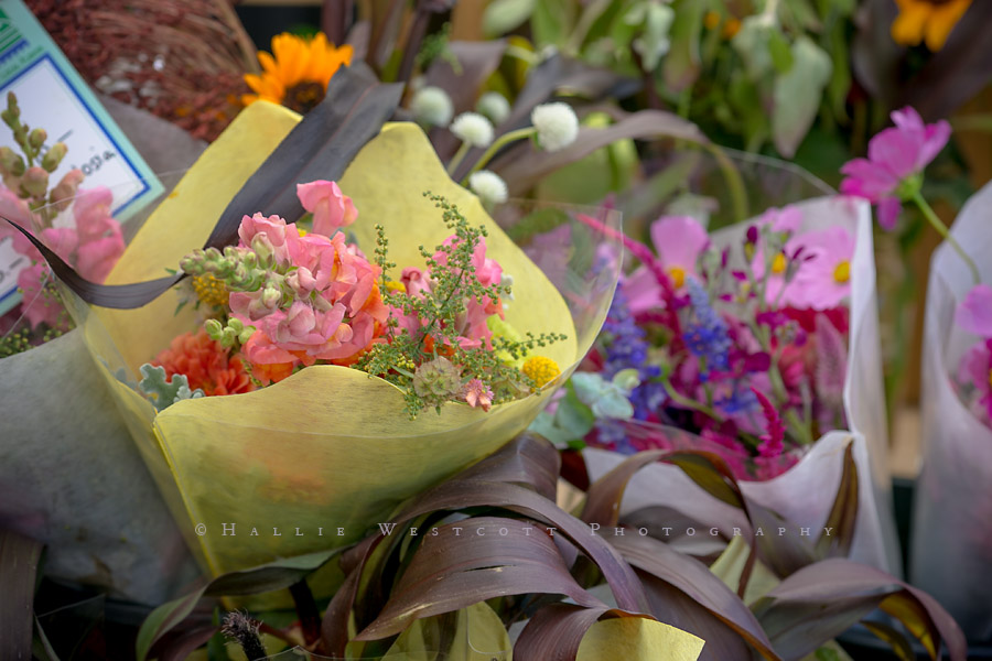 Hartford, CT Photographer captures flowers at the Coventry Regional Farmer