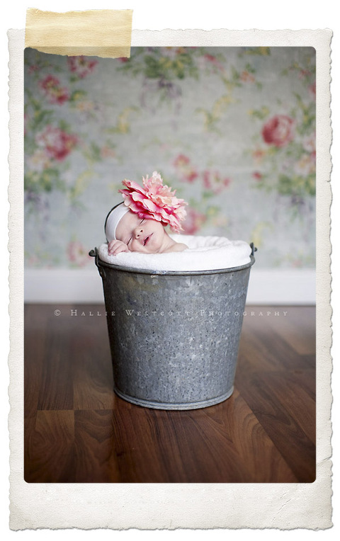 A newborn baby posed in a bucket for CT newborn photographer Hallie Westcott