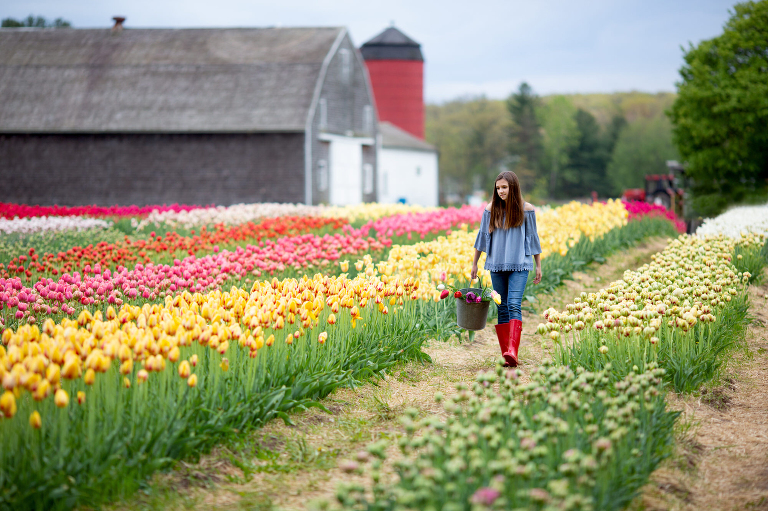 Picking beautiful tulips at Wicked Tulip Farm in RI during a lifestyle photo session